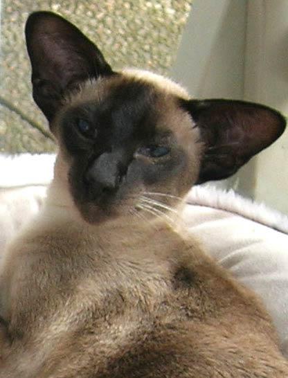 Entlaufene Katze durch Tierkommunikation wieder gefunden