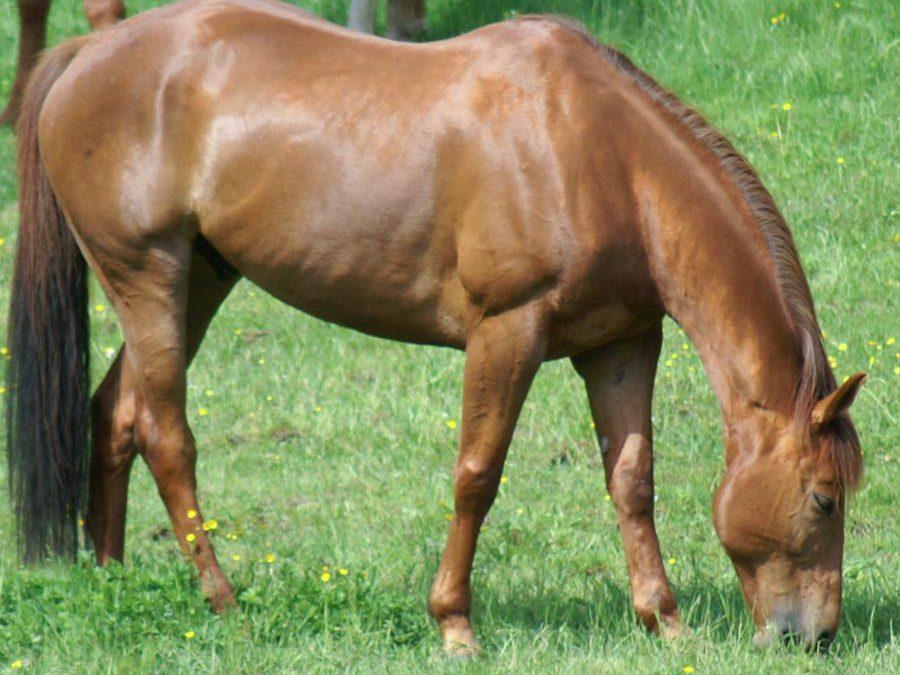 Tierkommunikation mit Sportpferd Wallach Paddy