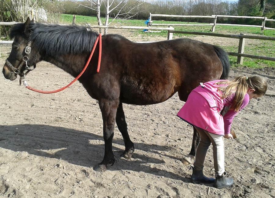 Tierkommunikation mit Deutschem Reitpony Cati, 18 Jahre