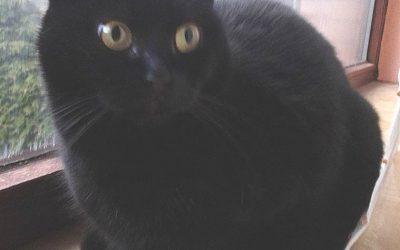 Tierkommunikation mit Katze Kitty, 7 Jahre