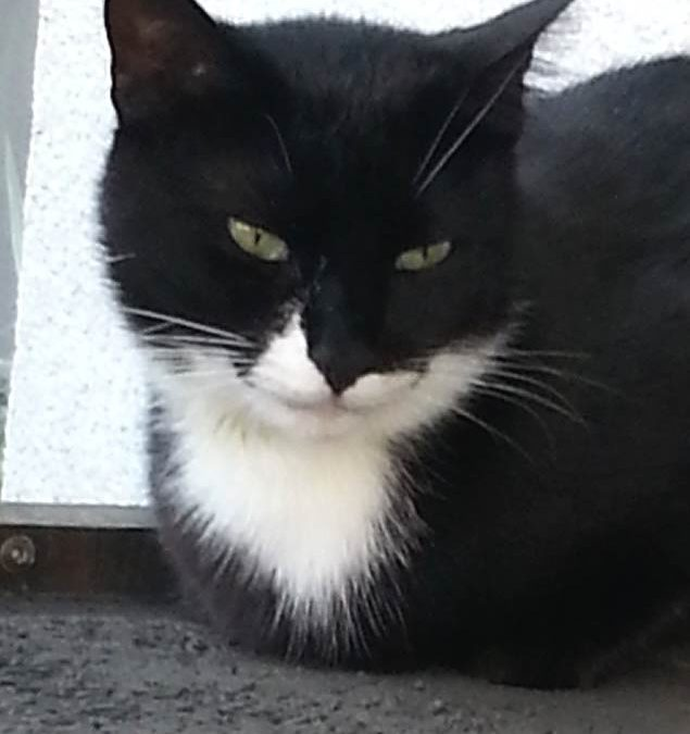 Tierkommunikation mit Katze Maya aus Bulgarien, 2 Jahre alt