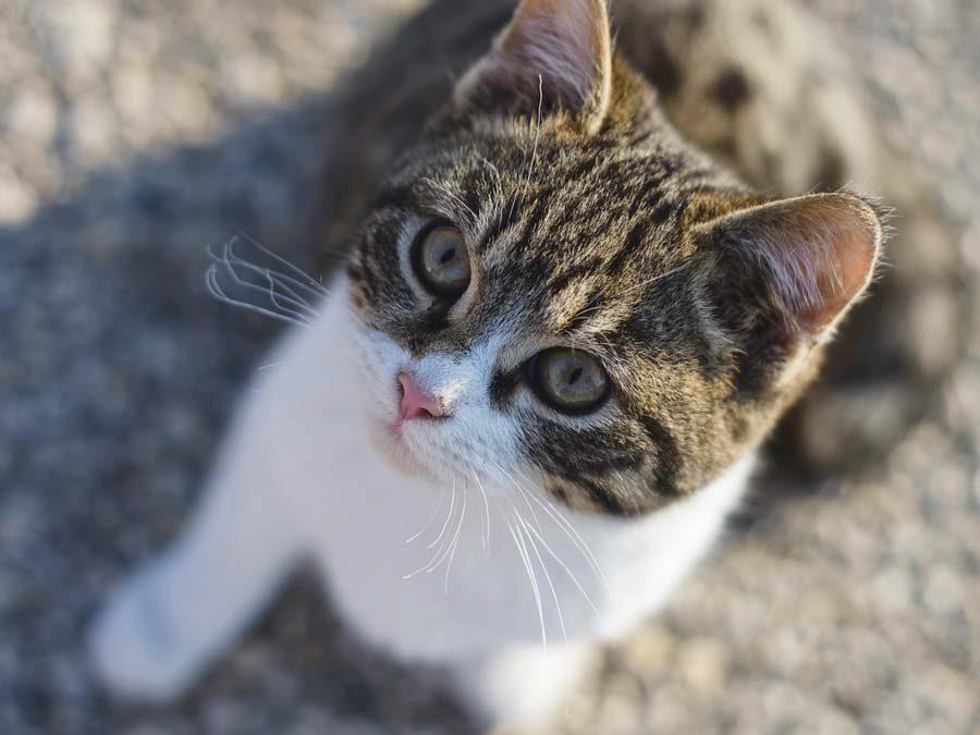 Tierkommunikation mit Katze Kimmy, 2 Jahre alt