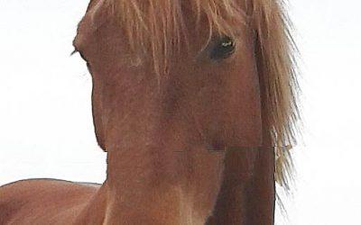 Tierkommunikation mit Wallach Sinero, 17 Jahre alt