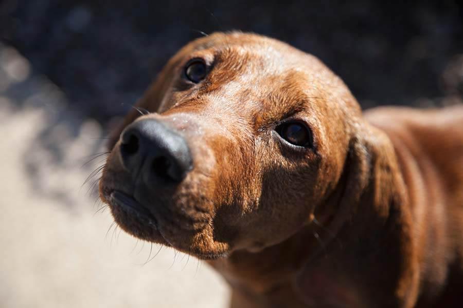 Tierkommunikation mit Hündin Motte, 1 Jahr alt