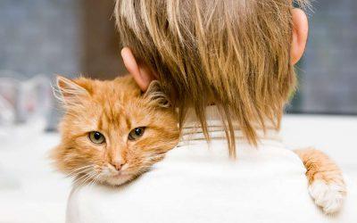 Tierkommunikation lernen – wie geht das?