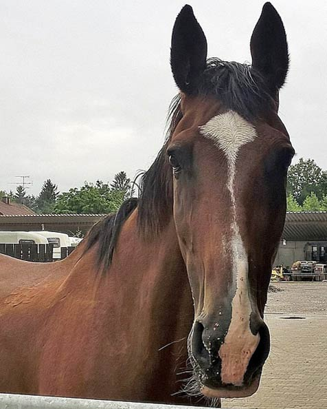 Tierkommunikation mit Stute Fee, 19 Jahre alt