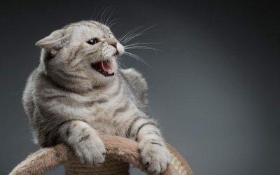 Tierkommunikation bei verhaltensauffälligen und kranken Katzen