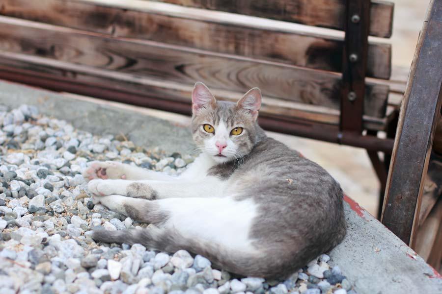Tierkommunikation mit Katze Selma, 9 Jahre alt