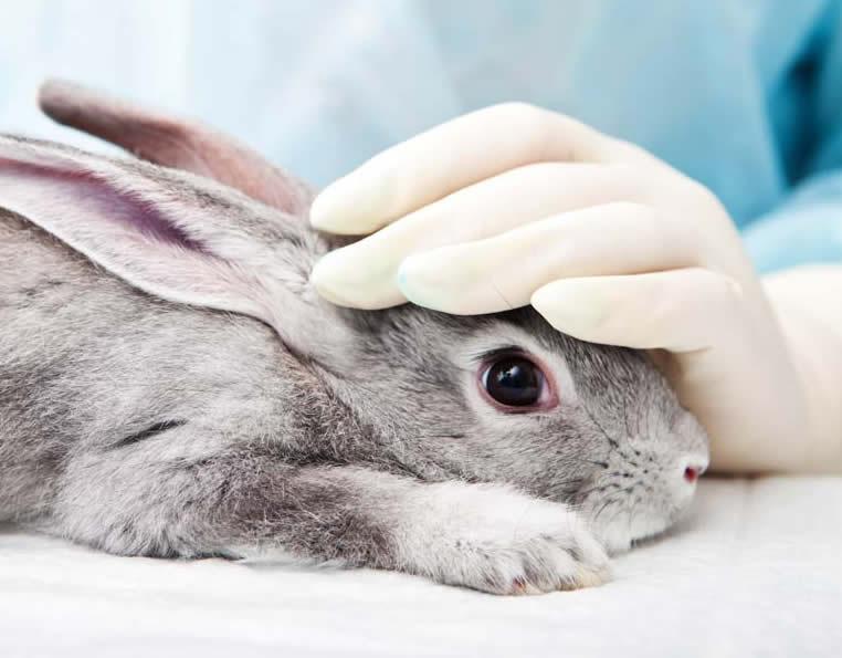 Tierkommunikation mit chronisch kranken Tieren