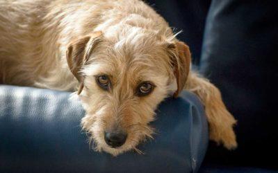 Tierkommunikation mit Romeo, Terrierrüde, 3 Jahre alt