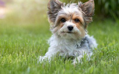 Tierkommunikation mit Ricardo, Terrier Mix aus dem Tierschutz