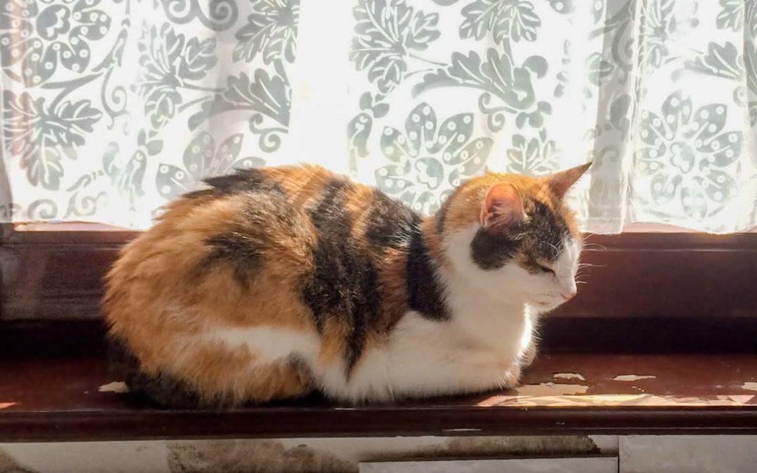 Tierkommunikation mit Silvie, Europäisch Kurzhaar Katze, 14 Jahre